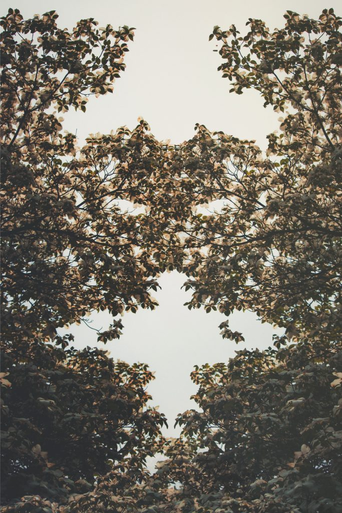 A view of leaves on a tree from below