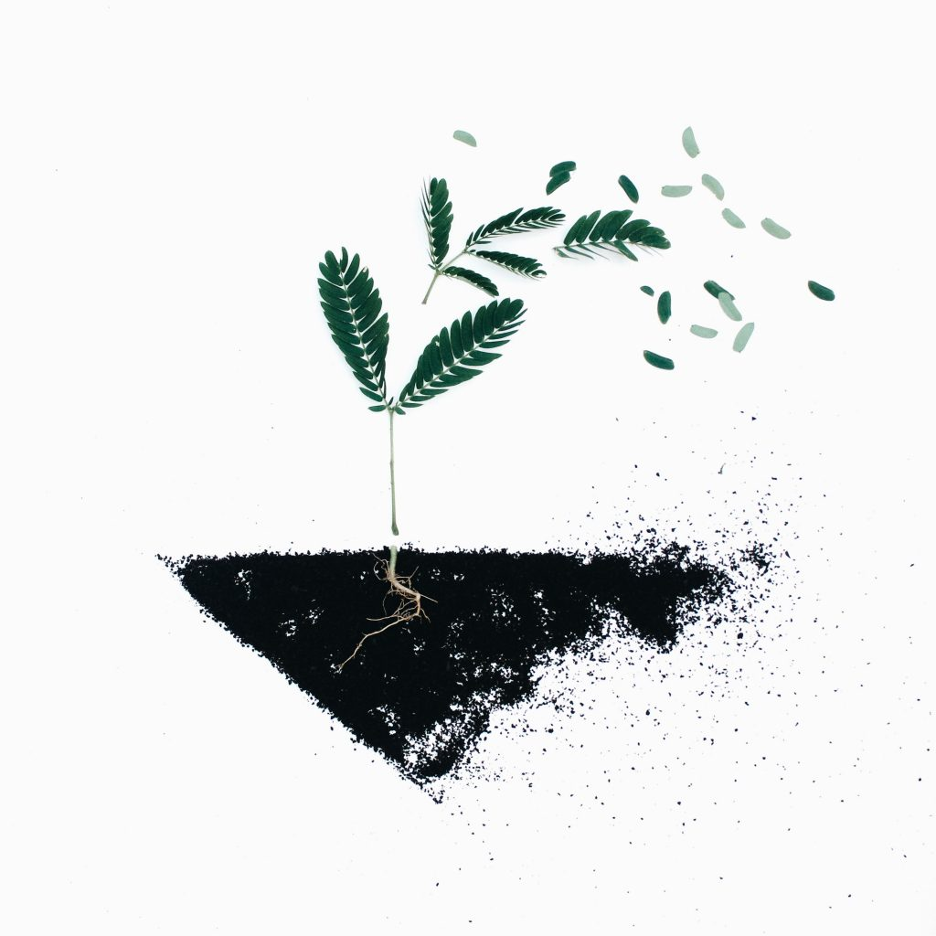 illustration of a plant in the ground. It's roots in the ground and it's seeds blowing into the wind.